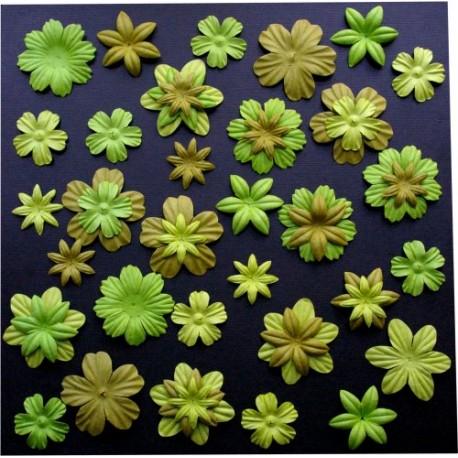 Surtido 45 Flores - Prairie