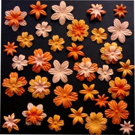 Surtido 45 Flores - Citrouilles