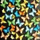 Surtido 40 Mariposas – Tropique