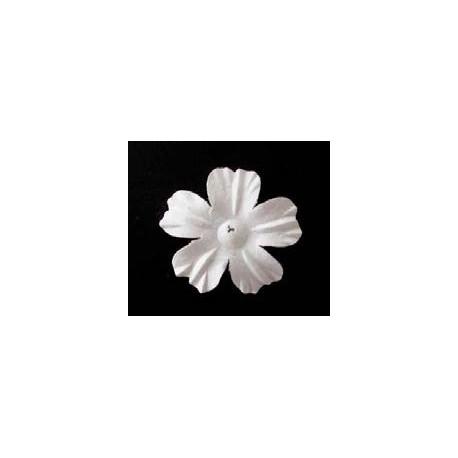 25 flores blancas - Cerisier