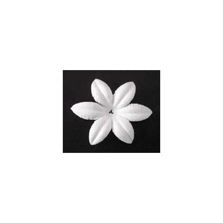 26 flores blancas - Anemone