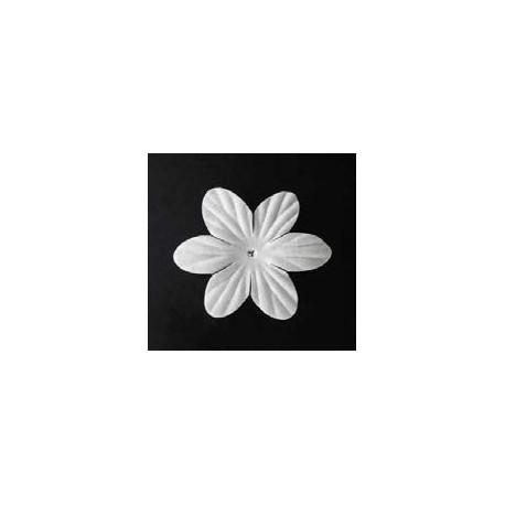25 flores blancas - Clematis