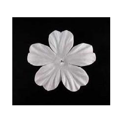 25 flores blancas - Geranium