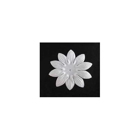 25 flores blancas - Joubarbe