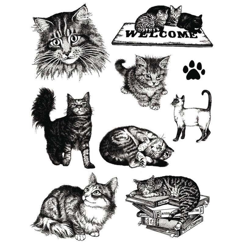 Set Sellos acrilicos Gatos